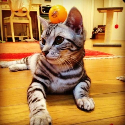 Ce chat là, à chaque fois que vous vous abstenez d'écrire sur le site, il soufre. Beaucoup. Alors écrivez. Merci pour lui.